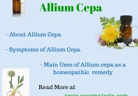 Allium Cepa-Learn At Easy Materia